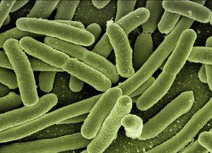 חיידק הליגיונלה