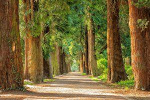 לשחרר לחץ למה כדאי לצאת לטיולים מרגיעים בטבע