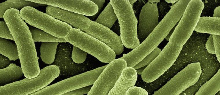 חיידק הליגיונלה: כיצד ניתן להימנע ממנו
